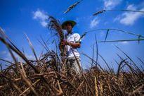 Bộ TNMT hỗ trợ các tỉnh ĐBSCL và Tây Nguyên khắc phục hạn mặn