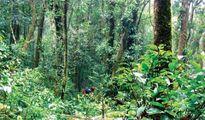 Du lịch sinh thái Vườn quốc gia Bidoup - Núi Bà (Lâm Đồng)