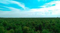 Khám phá rừng tràm bí ẩn tại làng nổi Tân Lập