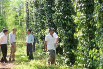Nâng tầm nông sản Đắk Nông