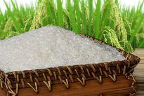 Mua gạo hữu cơ ở đâu, loại nào có chứng nhận đảm bảo?