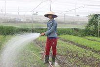 Cử nhân trồng rau sạch kiếm 20 triệu một tháng