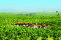 HAGL thêm ngành chế biến thịt, trồng cây ăn quả