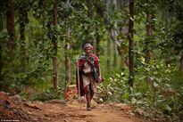 Cuộc sống của bộ tộc săn bắt, hái lượm cuối cùng ở Nepal