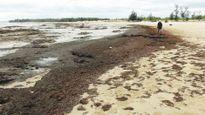 Rong biển phủ kín bờ là hiện tượng tự nhiên