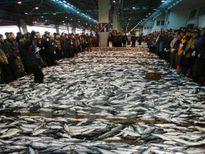 FAO cảnh báo về tình trạng đánh bắt cá bừa bãi
