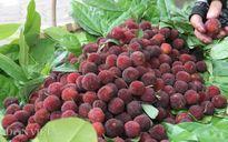 Những loại trái cây rừng vô cùng lạ mắt đang bán ở Thủ đô