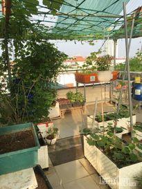 Mẹ trẻ 8x bận kinh doanh vẫn trồng rau quả, nuôi gà trên sân thượng
