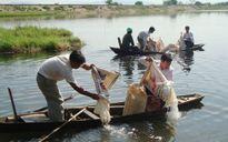 Thả 55.500 cá giống các loại để tái tạo nguồn lợi thủy sản