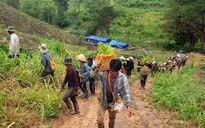 Được hưởng lợi, dân rủ nhau đi trồng rừng