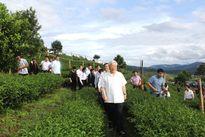 Hình ảnh: Tổng Bí thư hái chè cùng đồng bào ở Bản Bo, Lai Châu