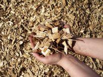 Xuất khẩu gỗ dăm đang 'tuột dốc không phanh'