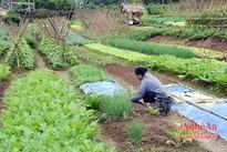 Nghệ An: Có 455 mô hình sản xuất bền vững theo tiêu chí nông thôn mới