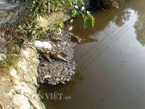 Thanh Hóa: Cá chết trắng mặt hồ, hôi thối không chịu nổi
