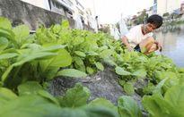 Top thực phẩm bẩn hot nhất tuần qua: Măng tươi Hà Nội nhiễm chất độc vàng ô