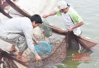 Đẩy mạnh nuôi trồng thủy sản an toàn