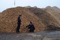 Doanh nghiệp dăm gỗ: Mong tạm miễn thuế xuất khẩu