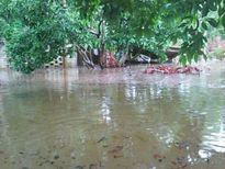 Bắc Giang: Chuyện bất thường xung quanh 'dự án thủy lợi Sông Sỏi'