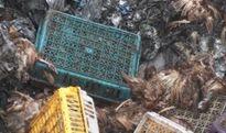 Quảng Ninh : Tiêu hủy nhiều lô hàng thực phẩm lậu từ Trung Quốc