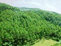 Sử dụng kinh phí bảo vệ và phát triển rừng