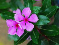 7 loài hoa nên trồng trong nhà vào mùa hè