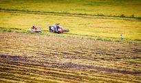 Để cứu lúa, đưa tôm nước lợ lên chiến lược