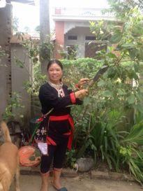 Điều trị nhiều bệnh hiệu quả nhờ bài thuốc nam gia truyền dân tộc Dao của lương y Triệu Thị Thịnh