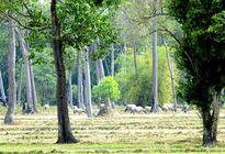 Nghiêm túc đóng cửa rừng tự nhiên