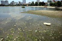Hà Nội: Cá chết trắng hồ Ba Mẫu