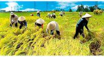 Nông dân điêu đứng vì không được canh tác trên đất của mình