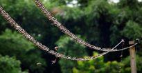 Ảnh động vật tuần: Rắn đuôi chuông hai đầu khám phá kỳ thú