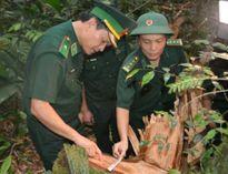 Vụ phá rừng pơmu: Tướng Biên phòng chỉ đạo nóng