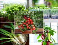 10 loại rau củ thích hợp nhất để trồng ở cửa sổ