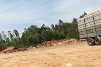 Bùng phát hàng loạt cơ sở chế biến gỗ dăm không phép tại Thanh Hóa: Bao giờ mới hết cảnh 'bắt cóc bỏ đĩa'?
