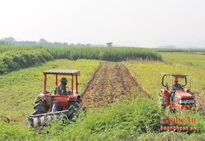 62 cánh đồng lớn ở Nghệ An