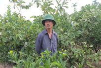 Chính quyền xã ra lệnh chặt cây ăn quả: 56 hộ dân nguy cơ trắng tay!