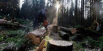 Cách con người sử dụng đất khiến một nửa hệ sinh thái dưới mức an toàn
