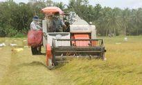 Thiếu chất xám, nông sản 'đất 9 rồng' bị lép vế
