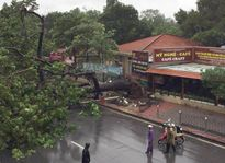Hà Nội: 1 người chết, 5 người bị thương vì bão số 1