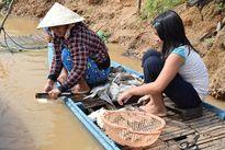 Tìm ra nguyên nhân cá chết trắng sông Sài Gòn