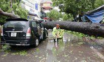 Hà Nội: 4 người bị thương do mưa bão