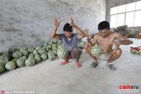 Dưa hấu Trung Quốc nảy tưng tưng, ruột trắng bóc, vị giống dưa chuột