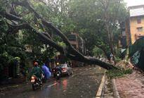 Ảnh hưởng của bão số 1: Hà Nội có 44 điểm có sự cố ảnh hưởng đến giao thông