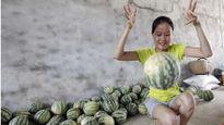 Kỳ lạ: Dưa hấu Trung Quốc nảy như bóng cao su khi ném