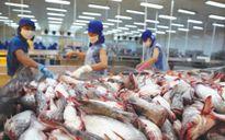 Sản xuất cá tra vẫn khó tứ bề