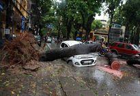 Hàng chục vụ tổn thất sau bão Mirinae, có vụ lên tới 10 triệu USD