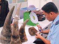 2.000 ngày truy tìm gã thợ ảnh buôn lậu sừng tê giác xuyên lục địa