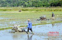 Quế Phong: Gieo cấy hơn 70% diện tích vụ mùa