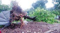 Hà Nội ngổn ngang sau mưa bão