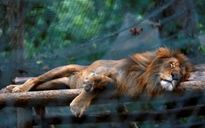 Khủng hoảng lương thực tại Venezuela: hơn 50 động vật bị bỏ đói tới chết trong sở thú